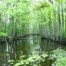Dosmal swamp