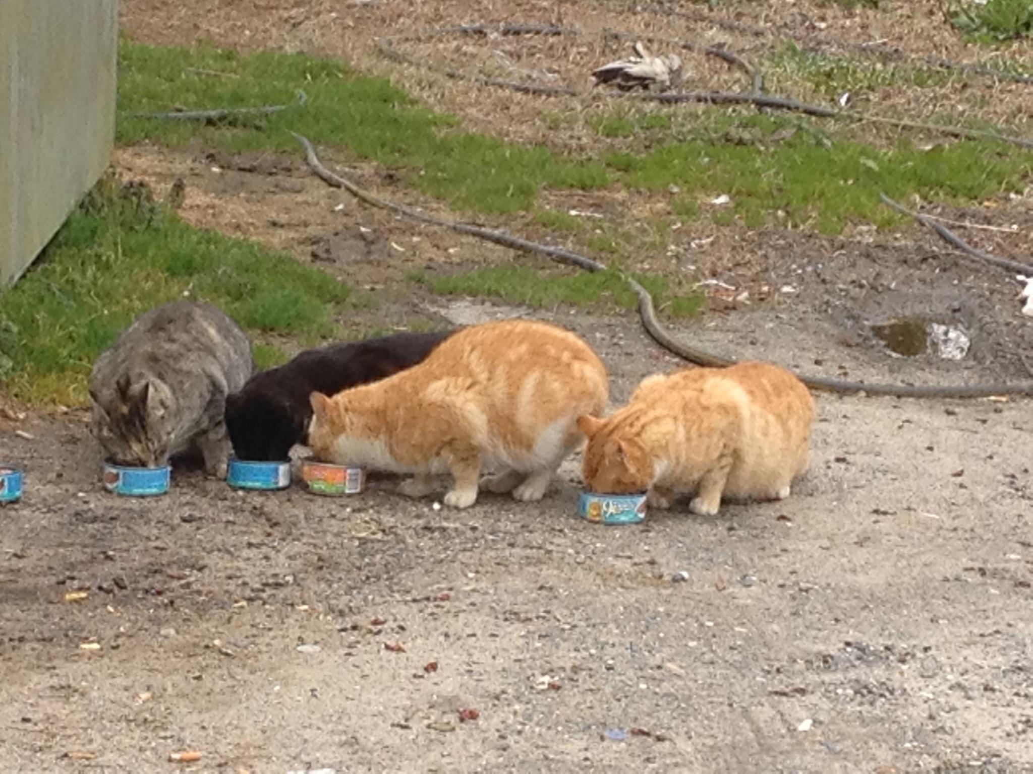 Helping Outdoor Cats in Your Hampton Roads Neighborhood